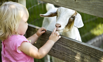 Toddler feeding a goat at a petting zoo